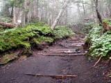 樹林帯の中を進む